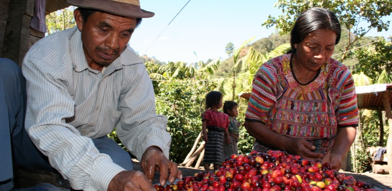Guatemalan Culture Coffee